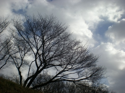春浅く.jpg