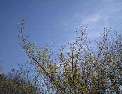 春の空.jpg