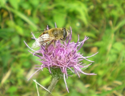 蜂と.jpg