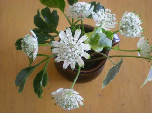 謎の花.jpg