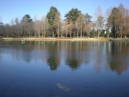 早春の池.jpg