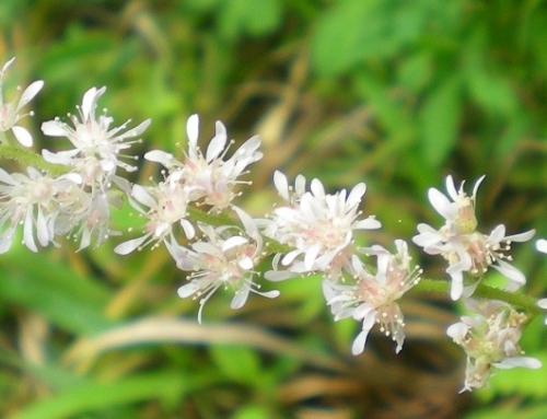 繊細な花.jpg