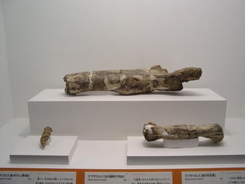マプサウルス 008