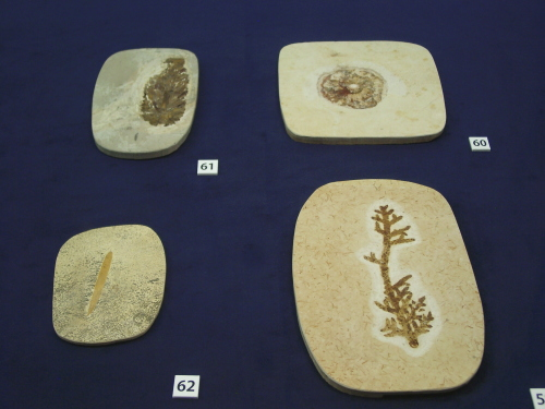 白亜紀の植物 001