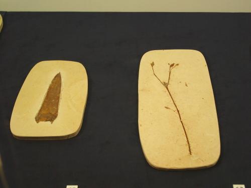 白亜紀の植物 002