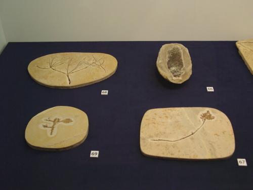 白亜紀の植物 003