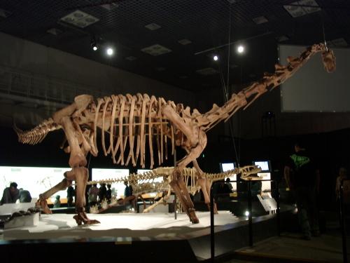 マシャカリサウルス 002