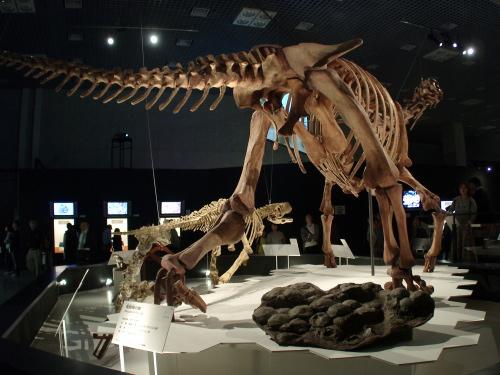 マシャカリサウルス003