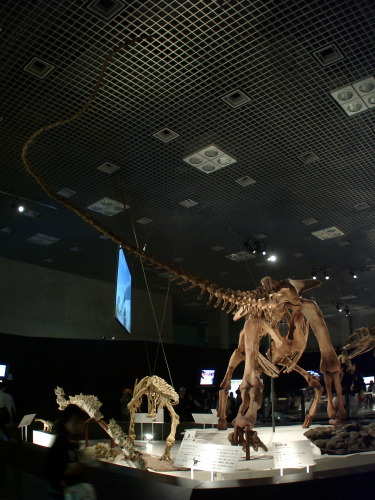 マシャカリサウルス005