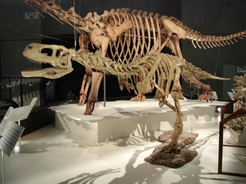 アウカサウルス 001