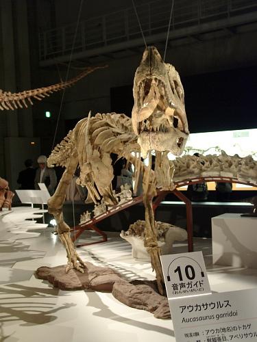 アウカサウルス 002