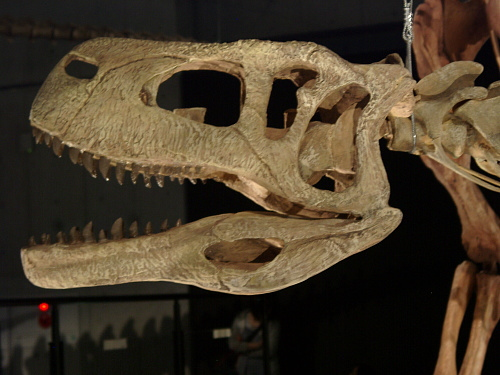 アウカサウルス 003