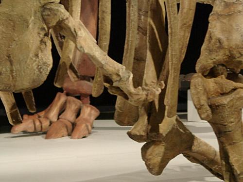 アウカサウルス 004