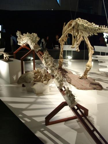 トリゴノサウルス 001