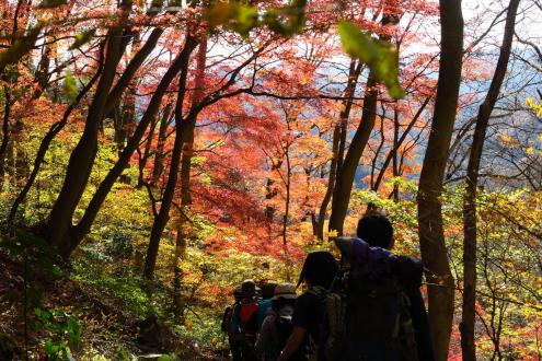 大円地越の先の紅葉