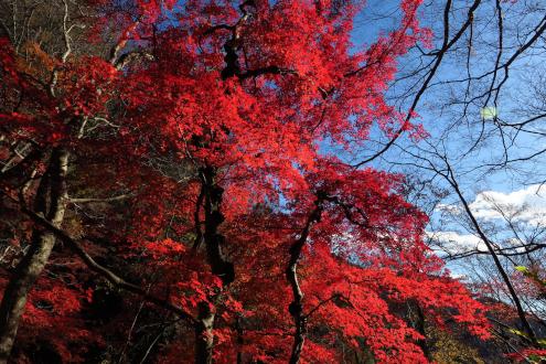 奥久慈男体山の紅葉