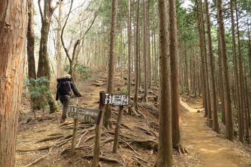 旧正丸峠山歩