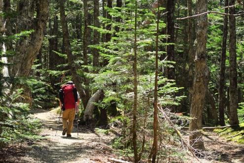 杖立峠から苺平の登山道