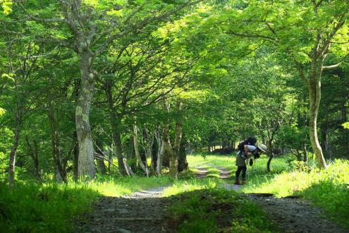 富士見下の林道