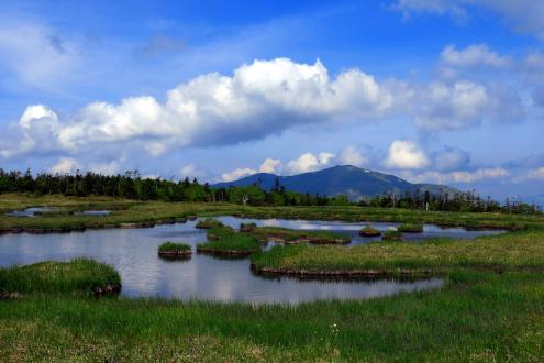 尾瀬アヤメ平の池塘