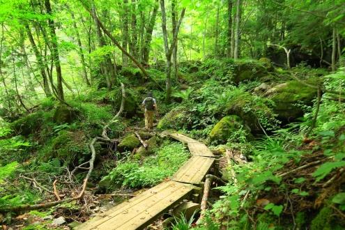 鬼怒沼への登山道