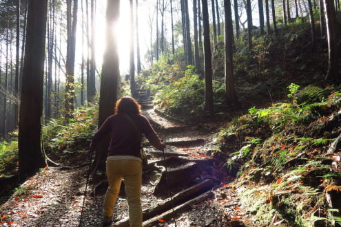 日和田山の登山道