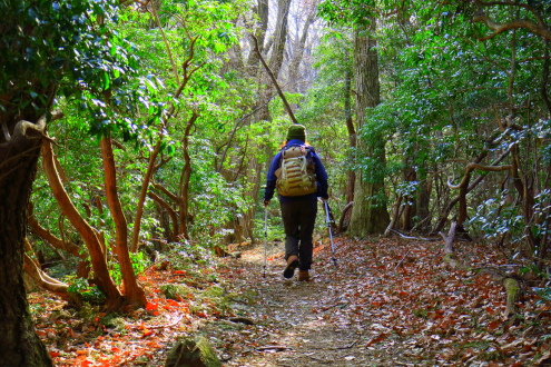 伊豆ヶ岳の登山道