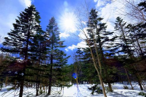 北八ヶ岳池巡り登山道