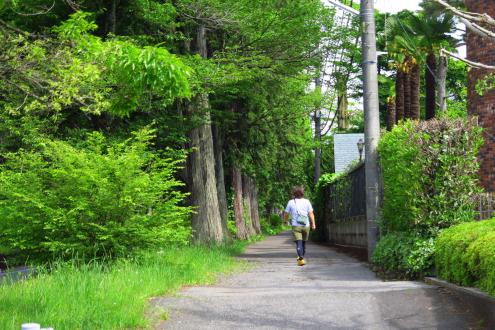 杉並木の歩道