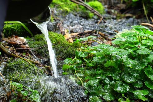 不動清水の水場
