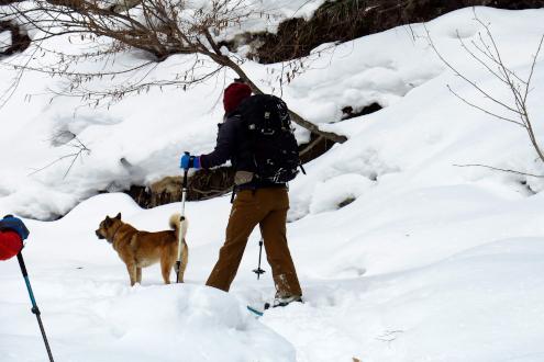 手白澤温泉の看板犬「岳」