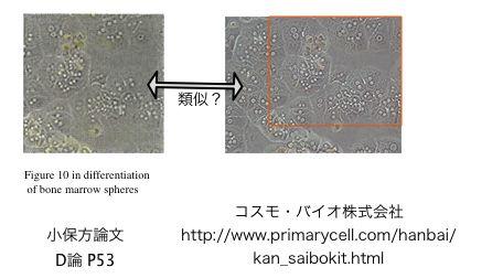 STAP細胞の小久保論文にウェブサイトからの盗用があった