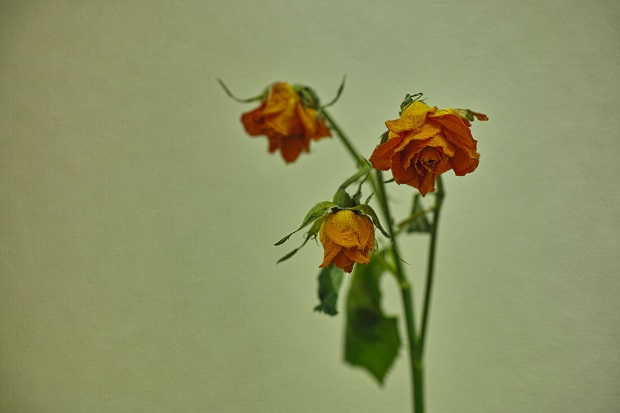 薔薇完成形1ブログ用.jpg