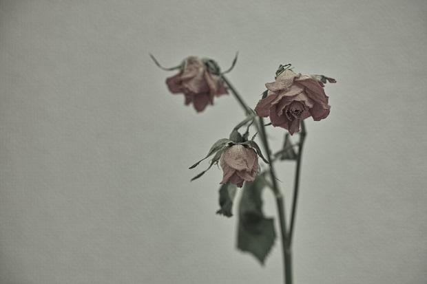 薔薇完成形3ブログ用.jpg