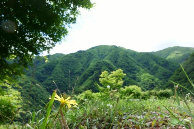 2017.6.4大血川1.JPG