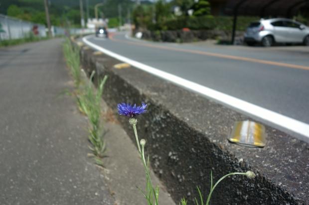 2018.4.29なり坊7.JPG