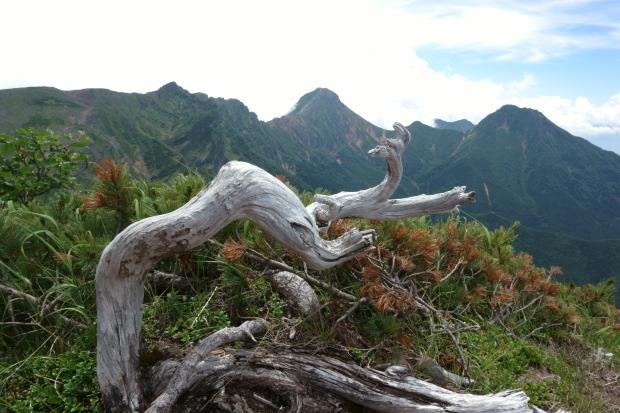 2018.7.22硫黄岳11.JPG