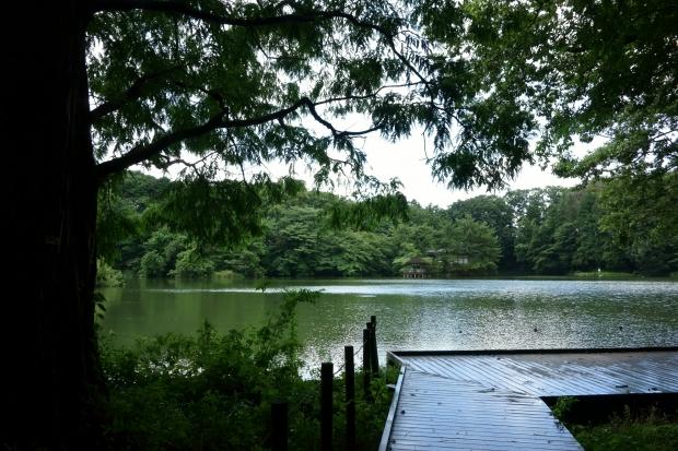 2018.7.29石神井公園3.JPG