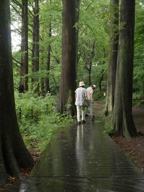 2018.7.29石神井公園13.jpg