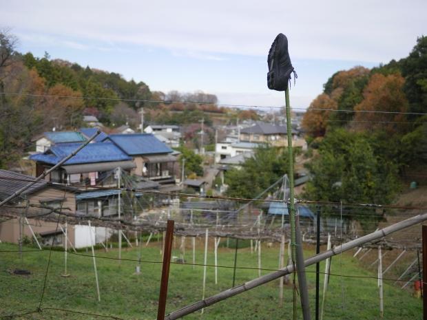 2018.12.9狭山湖7.jpg
