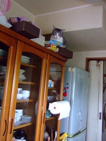 食器棚の空3