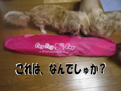 2010_05270002.JPG