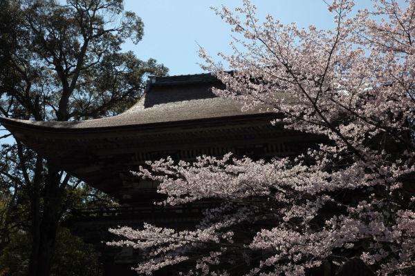 三井寺(仁王門)