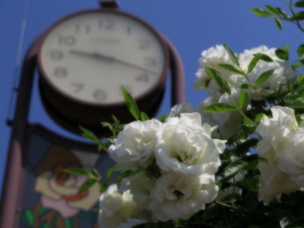 バラと時計