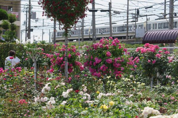 オッペンバラ園と電車