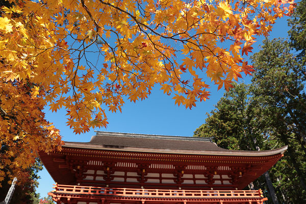 中門と黄色紅葉