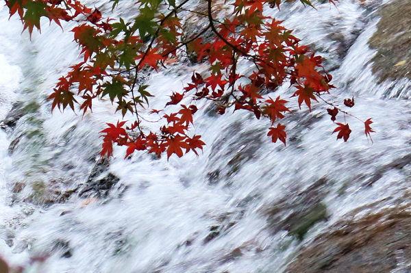 川のながれと紅葉