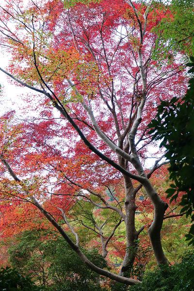山露路の庭