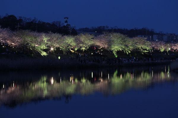 桜ライトアップ(グリーン)