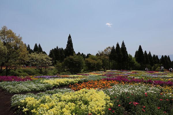 花のパッチワーク